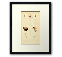 The Animal Kingdom by Georges Cuvier, PA Latreille, and Henry McMurtrie 1834  235 - Mollusca Mollusks Framed Print