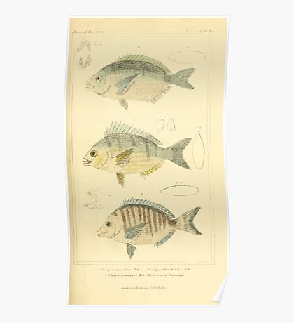The Animal Kingdom by Georges Cuvier, PA Latreille, and Henry McMurtrie 1834  112 - Pisces Fish Poster