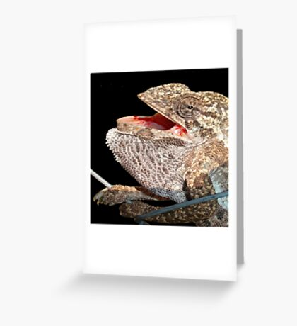 A Chameleon With Open Mouth Isolated On Black Greeting Card