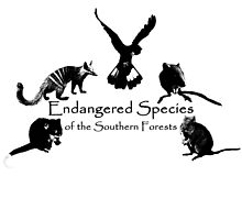 Endangered Species of the Southern Forests by Jodieq5