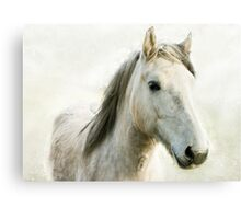 White Horse Head Portrait Canvas Print