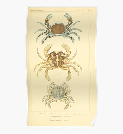 The Animal Kingdom by Georges Cuvier, PA Latreille, and Henry McMurtrie 1834  303 - Crustacea Crustaeans Poster