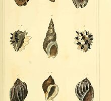 The Animal Kingdom by Georges Cuvier, PA Latreille, and Henry McMurtrie 1834  247 - Mollusca Mollusks by wetdryvac