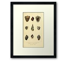 The Animal Kingdom by Georges Cuvier, PA Latreille, and Henry McMurtrie 1834  247 - Mollusca Mollusks Framed Print