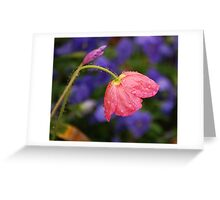 Pink and Purple blossoming: Greeting Card