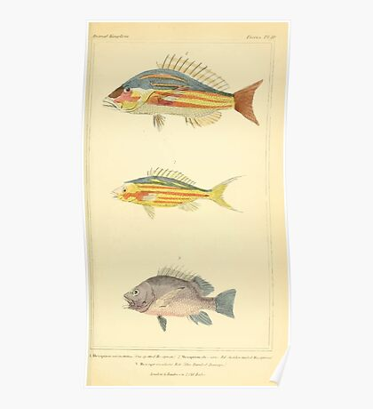 The Animal Kingdom by Georges Cuvier, PA Latreille, and Henry McMurtrie 1834  053 - Pisces Fish Poster