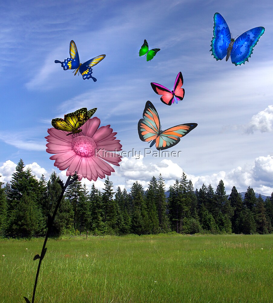 A Butterflies Dream by Kimberly Palmer