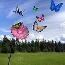 A Butterflies Dream by Kimberly Palmer