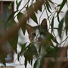 green cat by bubasvaba