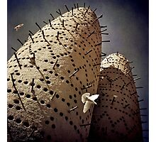 Arabian Pigeon Towers (Colour) Photographic Print