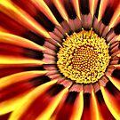 Sunshine Bloom by Sheri Nye