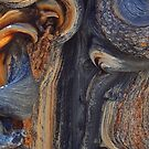 Bristle Cone Pine Abstract by photosbyflood