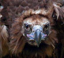 Vulture Culture by Krys Bailey
