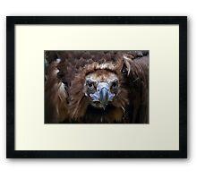 Vulture Culture Framed Print