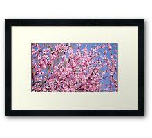 Cherry Blossom Colour  Framed Print