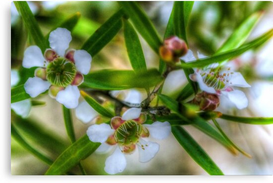 Lemon Scented Tea Tree. by Bette Devine