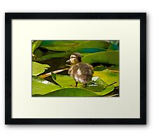 Lost Duckling Framed Print