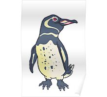 Galapagos Penguin Poster