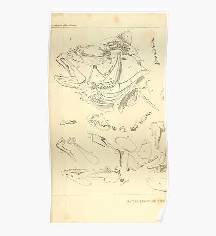 The Animal Kingdom by Georges Cuvier, PA Latreille, and Henry McMurtrie 1834  198 - Pisces Fish Poster
