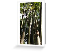 Bamboo in Chiang Dao, Thailand Greeting Card