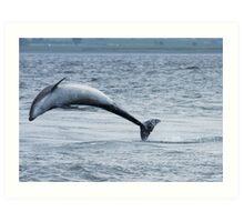Dolphin Leap Art Print