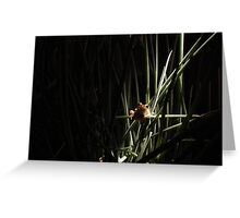 frog in spring onions Greeting Card