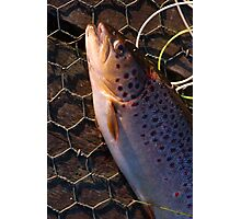 Landed trout Photographic Print
