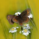 Butterfly on Gold by jacqi