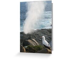 Nazca Boobie looks over blow hole, Galapagos Greeting Card