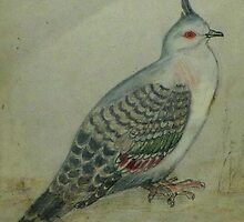 Crested Pigeon by Redviolin