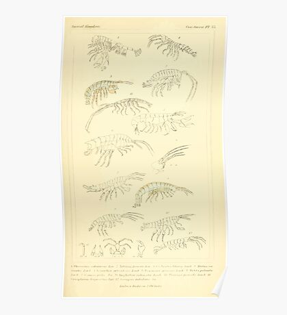 The Animal Kingdom by Georges Cuvier, PA Latreille, and Henry McMurtrie 1834  346 - Crustacea Crustaeans Poster