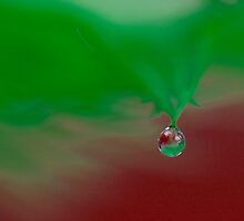 Water drop on feather by Tony Eccles