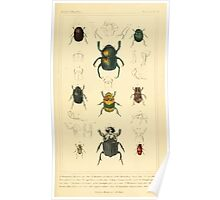 The Animal Kingdom by Georges Cuvier, PA Latreille, and Henry McMurtrie 1834  442 - Insecta Insects Poster