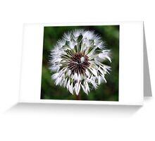 Dandelion (In a Peebles Garden!) Greeting Card