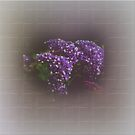 Statice (Limonium) #2 by Elaine Teague