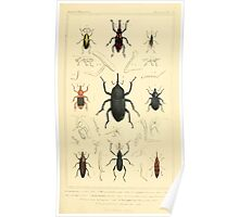 The Animal Kingdom by Georges Cuvier, PA Latreille, and Henry McMurtrie 1834  463 - Insecta Insects Poster
