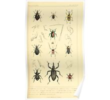 The Animal Kingdom by Georges Cuvier, PA Latreille, and Henry McMurtrie 1834  462 - Insecta Insects Poster