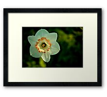 Beautiful White Flower Framed Print