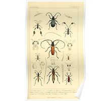 The Animal Kingdom by Georges Cuvier, PA Latreille, and Henry McMurtrie 1834  467 - Insecta Insects Poster