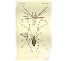 The Animal Kingdom by Georges Cuvier, PA Latreille, and Henry McMurtrie 1834  377 - Arachnides Arachnids Poster