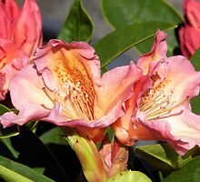 Rhododendron  by LoneAngel