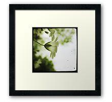Candide Framed Print