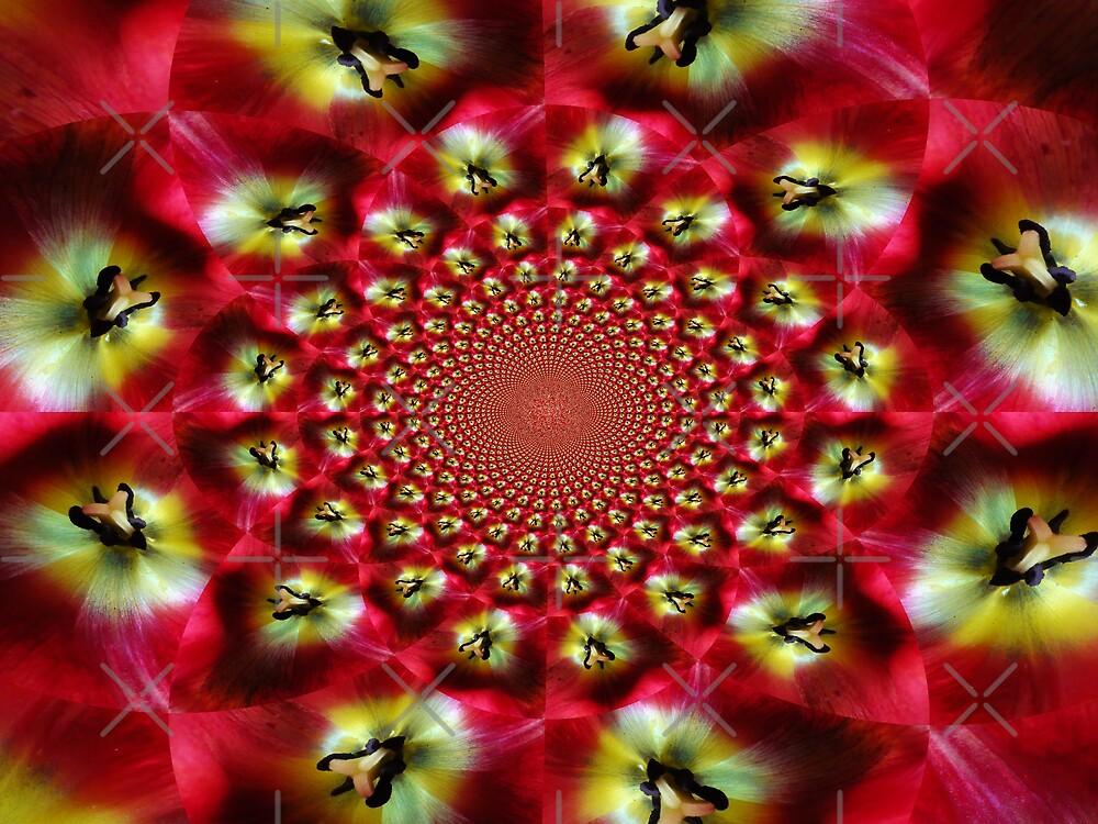 Kaleidoscope Tulip by Linda Bianic