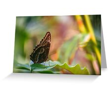 Butterfly's World Greeting Card