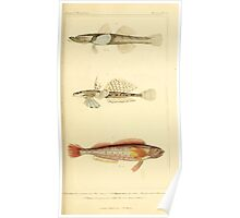 The Animal Kingdom by Georges Cuvier, PA Latreille, and Henry McMurtrie 1834  161 - Pisces Fish Poster
