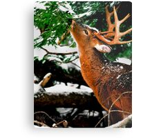 Taste O'wintergreen Metal Print