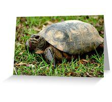 Box Turtle on the Run Greeting Card