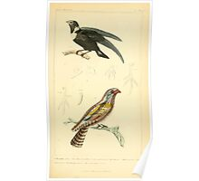 The Animal Kingdom by Georges Cuvier, PA Latreille, and Henry McMurtrie 1834 702 - Aves Avians Birds Poster