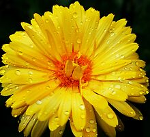 Yellow Rain by Erin-Frances