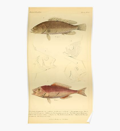 The Animal Kingdom by Georges Cuvier, PA Latreille, and Henry McMurtrie 1834  064 - Pisces Fish Poster